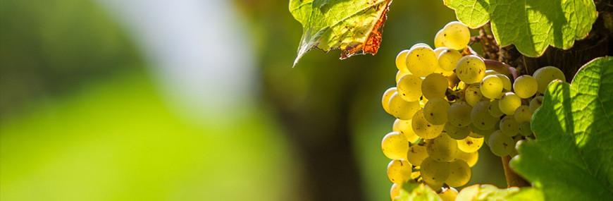 Vin de Gascogne et Armagnac du Gers, Vente de vins